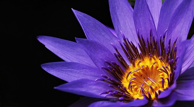 Flower Nature Relaxation Stress Revive